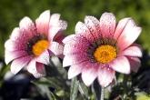 Wa11papers.ru_flowers_2560x1600_104