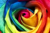 Wa11papers.ru_flowers_2652x1658_106