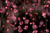 Wa11papers.ru_flowers_2950x2094_031