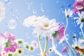 Wa11papers.ru_flowers_2950x2094_082