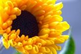 wa11papers-ru_flowers_1600x1200