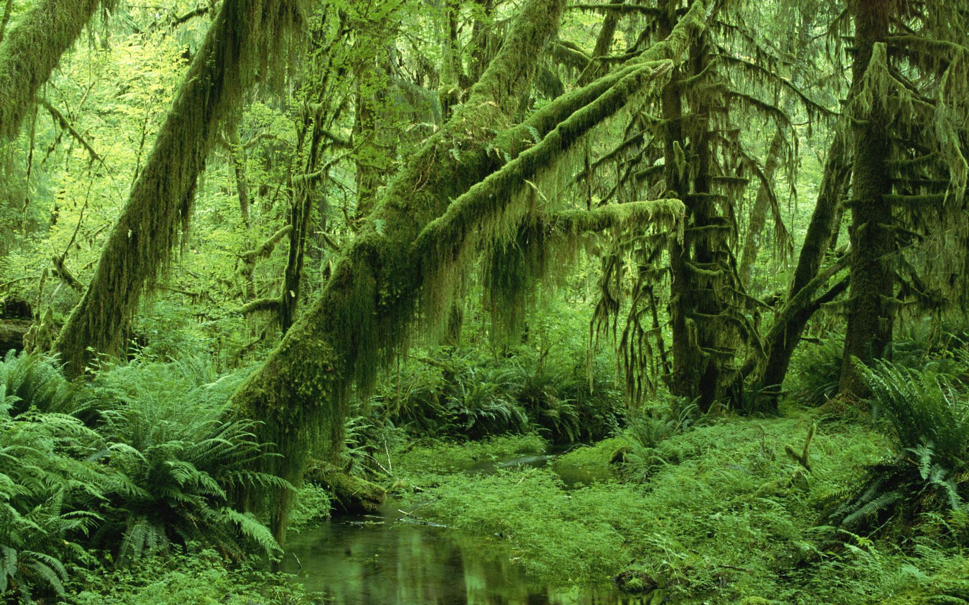 Подборка обоев лес