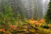 Forest Brook, Mount Rainier National Park