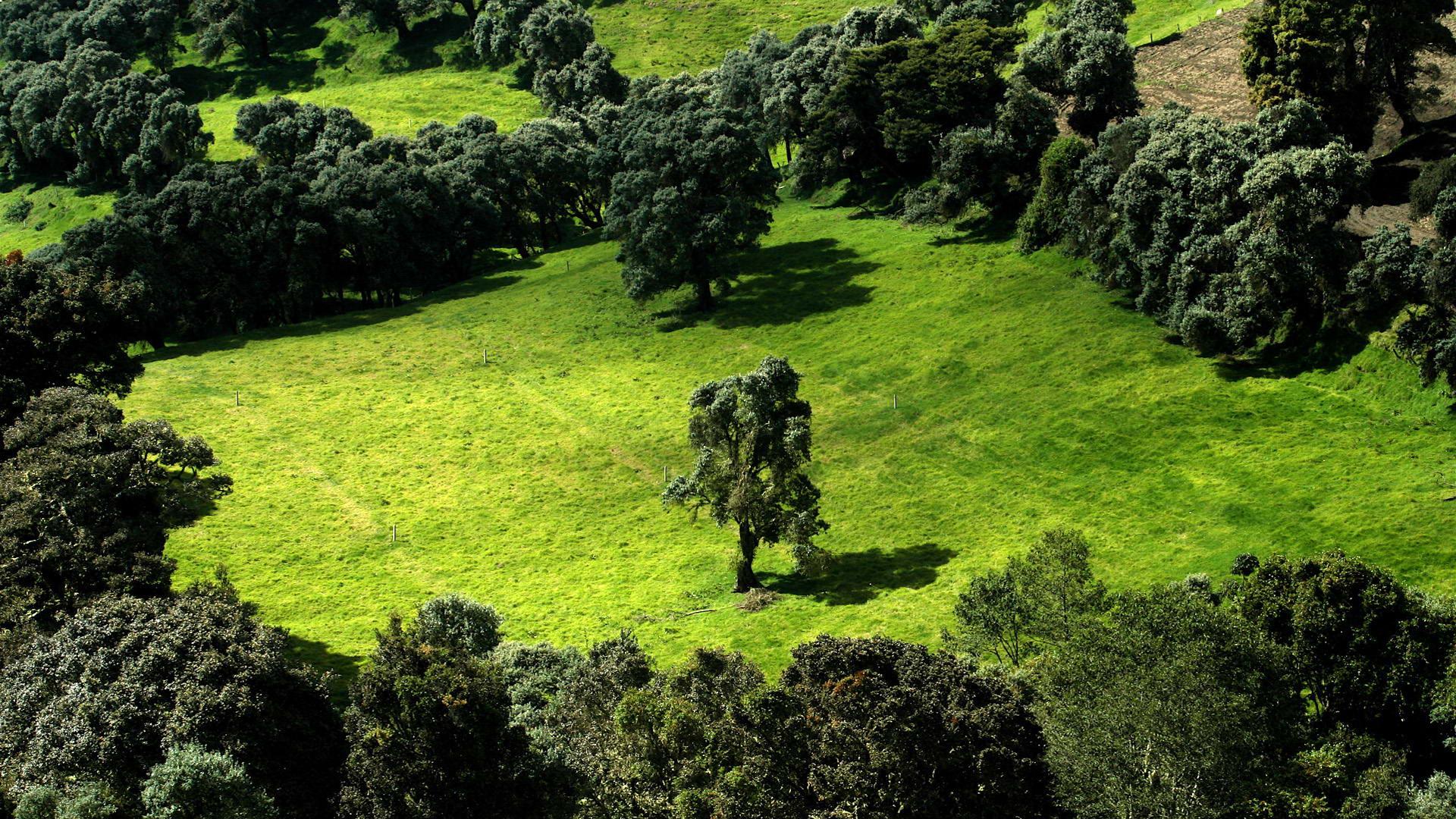 environment essay natural environment essay
