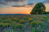 Wa11papers.ru_11_2020_nature_2300x1535_123