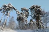 Wa11papers.ru_11_2020_nature_2560x1600_137