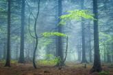 Wa11papers.ru_11_2020_nature_3600x2250_181