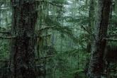 wa11papers-ru_nature_2560x1600_019