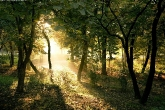 wa11papers-ru_nature_2560x1600_020