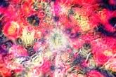 wa11papers-ru_psy_1600x1200_012