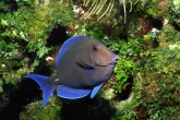Wa11papers.ru_underwaterworld_1600x1200_021