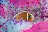 Wa11papers.ru_underwaterworld_1600x1200_027