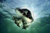 Wa11papers.ru_underwaterworld_1600x1200_029