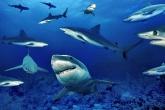 Wa11papers.ru_underwaterworld_1600x1200_032