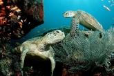 Wa11papers.ru_underwaterworld_1600x1200_040