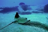 Wa11papers.ru_underwaterworld_1600x1200_050