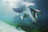 Wa11papers.ru_underwaterworld_1600x1200_054