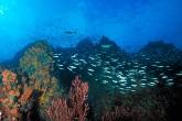 Wa11papers.ru_underwaterworld_1600x1200_055