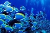 Wa11papers.ru_underwaterworld_1600x1200_064