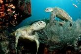 Wa11papers.ru_underwaterworld_1600x1200_067