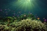 Wa11papers.ru_underwaterworld_1600x1200_068