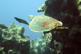 wa11papers-ru_underwaterword_2288x1712_000