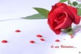 wa11papers.ru_valentines_day_1920x1200_000