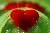 wa11papers.ru_valentines_day_1920x1200_027