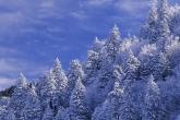 Wa11papers.ru_Winter_1600x1200_009