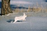 Wa11papers.ru_Winter_1920x1080_026