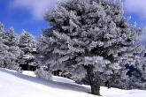 Wa11papers.ru_Winter_1920x1200_043