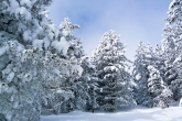 Wa11papers.ru_Winter_1920x1200_055