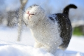 Wa11papers.ru_Winter_1920x1200_140
