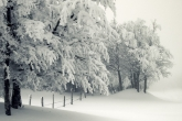 Wa11papers.ru_Winter_1920x1200_155