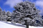 Wa11papers.ru_Winter_1920x1440_098