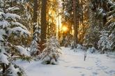 Wa11papers.ru_Winter_2362x1417_172