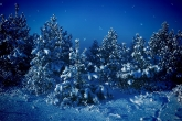 Wa11papers.ru_Winter_2560x1600_050
