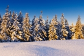 Wa11papers.ru_Winter_2560x1600_062